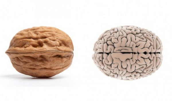 Walnuts and brain