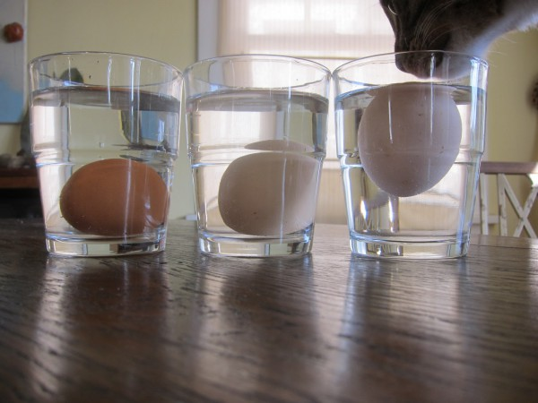 testing if an egg is fresh with glass of water